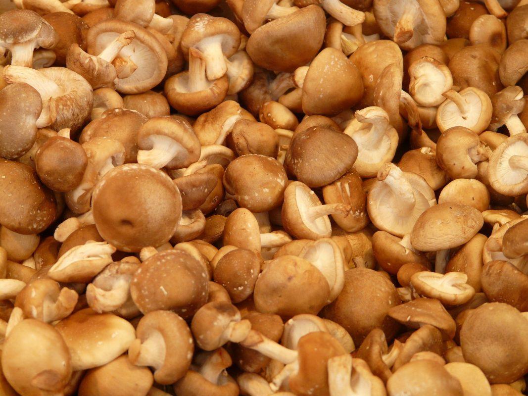 O shiitake aumenta a imunidade através do nutriente lentinana.