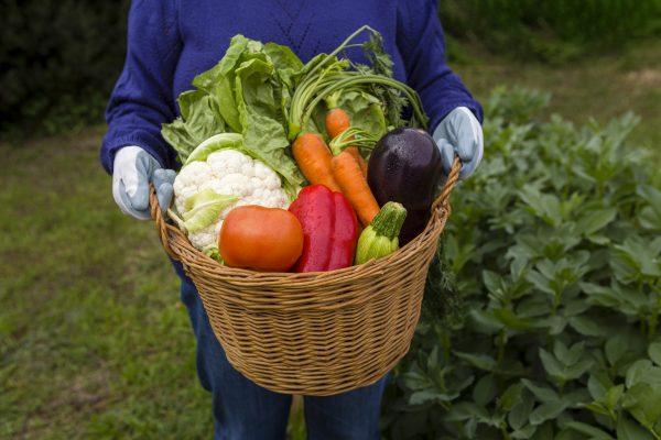 Alimento Orgânico: bom para saúde e meio ambiente